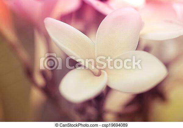 Tropical white flower frangipani (plumeria). macro shoot pictures ...
