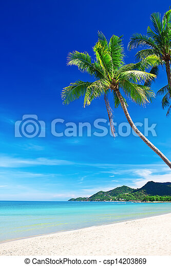 Tropical white sand beach with palm trees - csp14203869
