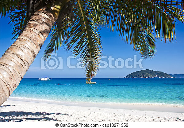 Tropical white sand beach with palm trees - csp13271352