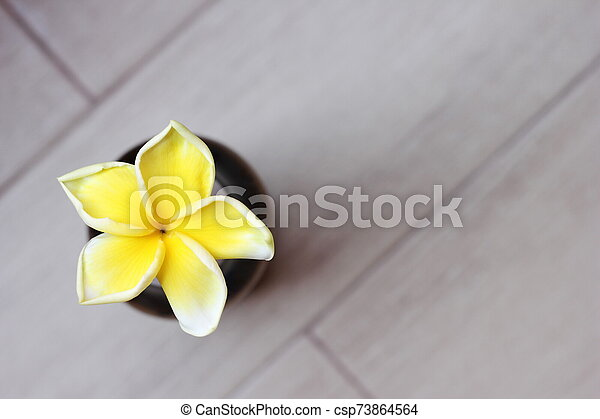 Tropical yellow frangipani flower on grey background. Top view. - csp73864564