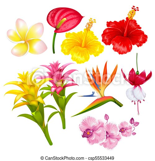 Fiori Esotici.Tropicale Fiori Esotici Set Esotico Estate Illustration Set