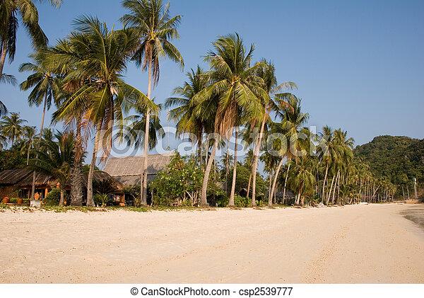 tropicale, spiaggia palma, albero - csp2539777