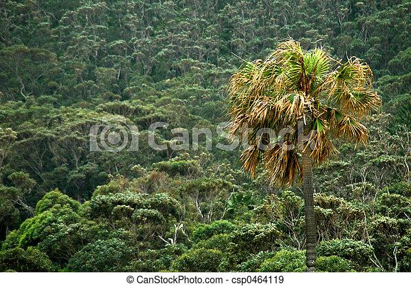 tropics - csp0464119