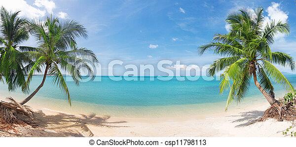 tropikalny, panoramiczny, orzech kokosowy, plaża, dłoń - csp11798113