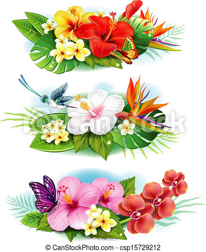 Ein Arrangement von tropischen Blumen - csp15729212