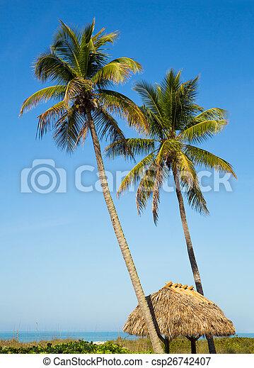 tropische , ontsnapping - csp26742407