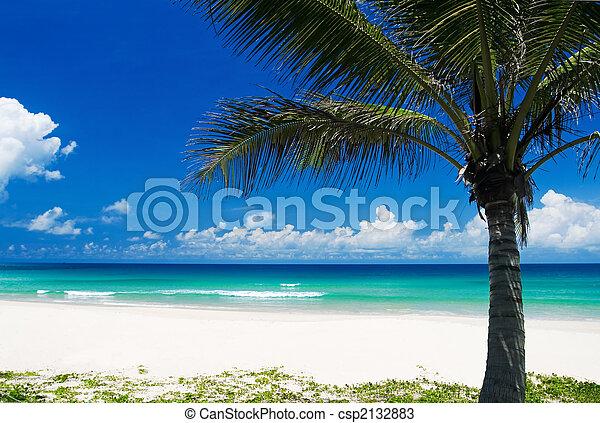 Palmen auf einem tropischen Strand - csp2132883
