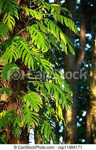 Tropische Pflanze - csp11484171