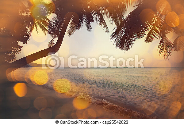 Tropischer Strand - csp25542023
