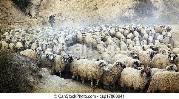 troupeau, sien, vieux, berger, photo - csp17868041
