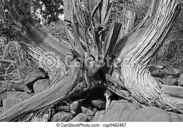 Trunk and Roots - csp0462467