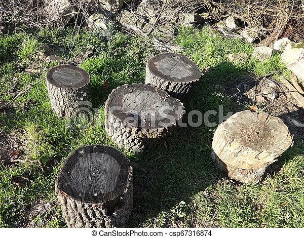 Trunks Chairs in a Garden - csp67316874