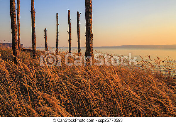 Trunks of dead wood on the shore of a huge lake - csp25778593