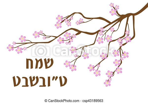 Tu Bishvat greeting card, poster. Jewish holiday, new year of trees. Blooming tree. Vector illustration. - csp43189563