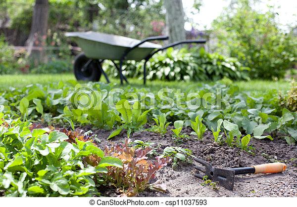 tuin, fragment, jonge, bedden, keukenkruiden, fris - csp11037593