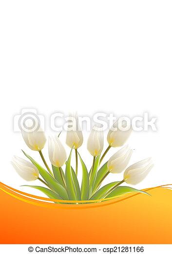 tulipánok, fehér, születésnap kártya - csp21281166
