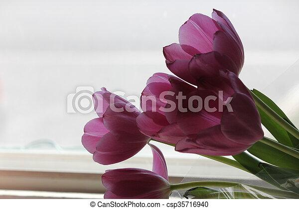 tulip dark purple backlit dark purple tulips through a glass window