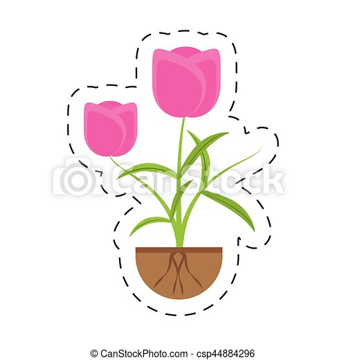 tulip flower growing plant - csp44884296