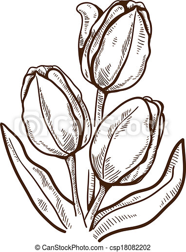 tulip flower isolated on white vector