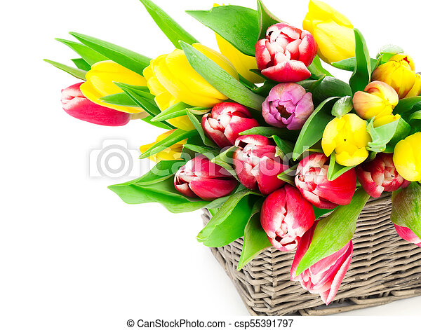 tulip flowers in a basket on a white background - csp55391797