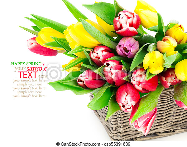 tulip flowers in a basket on a white background - csp55391839