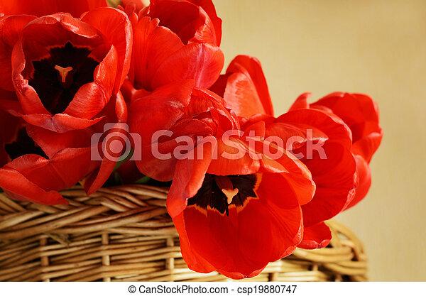 Tulip flowers in a basket - csp19880747