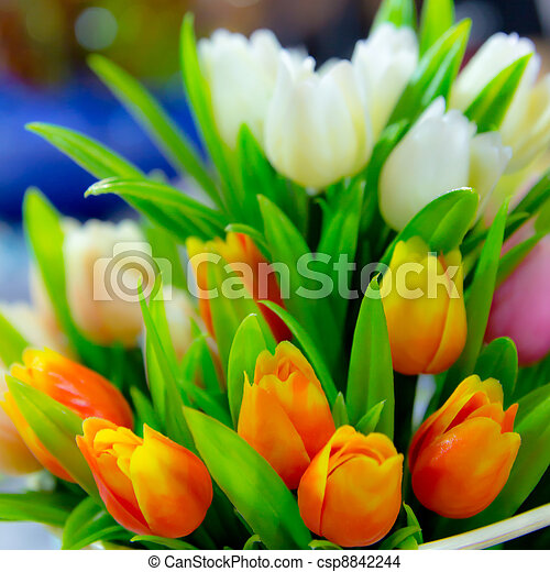 tulip flowers - csp8842244