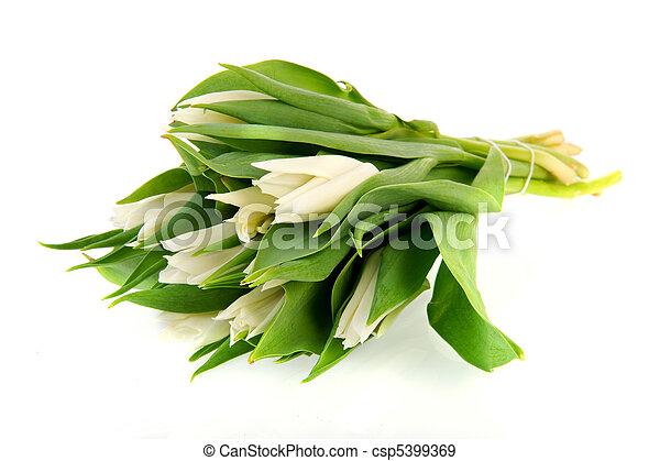 tulipanes, blanco - csp5399369