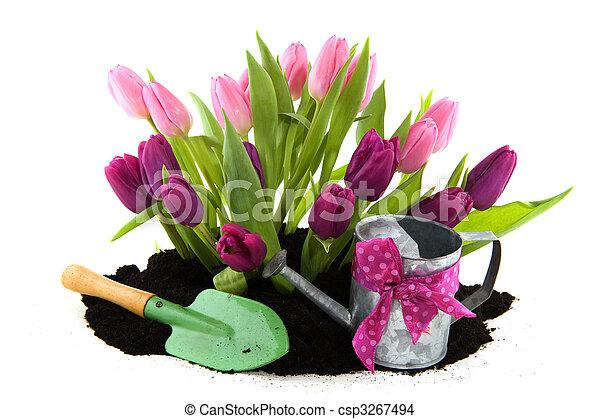 Tulipanes y pajarera - csp3267494