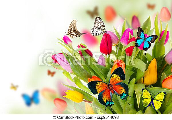 Mariposas en tulipanes - csp9514093