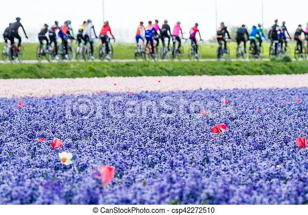 tulipe, brin, rouges, bleubells - csp42272510
