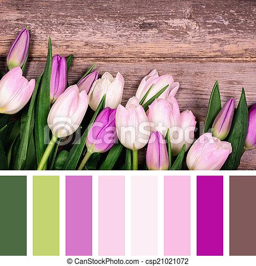 Tulipe Couleur Palette Rose Bois Palette Vieux Swatches