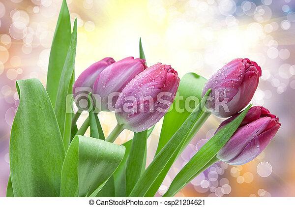 tulipe, fleurs - csp21204621