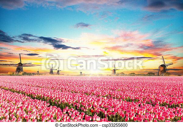 tulipes, éoliennes, hollandais, champ, vibrant - csp33255600