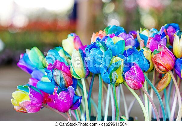tulipes fleur color arc en ciel arc en ciel jardin photographie de stock rechercher. Black Bedroom Furniture Sets. Home Design Ideas