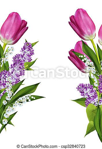 tulipes, fleurs blanches, isolé, fond - csp32840723