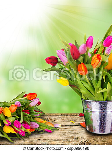 tulipes - csp8996198