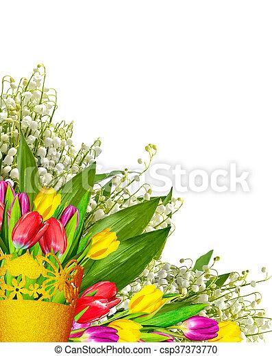 tulipes, isolé, arrière-plan., printemps, fleurs blanches - csp37373770