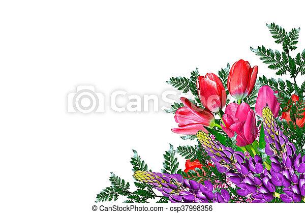 tulipes, isolé, arrière-plan., printemps, fleurs blanches - csp37998356