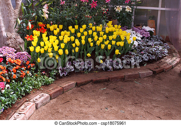 Tulips are grown up and exquisite. Parks - csp18075961