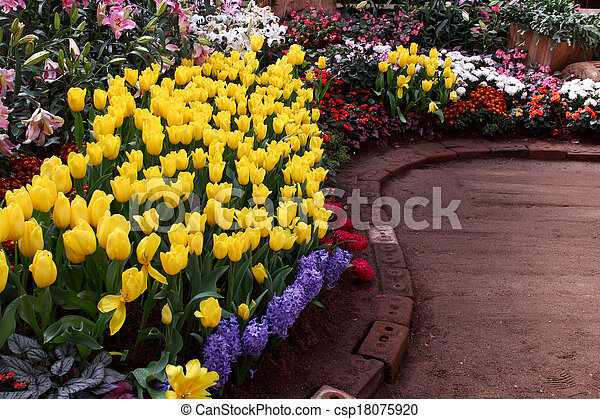 Tulips are grown up and exquisite. Parks - csp18075920