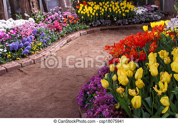 Tulips are grown up and exquisite. Parks - csp18075941