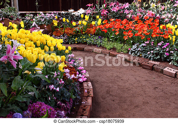 Tulips are grown up and exquisite. Parks - csp18075939