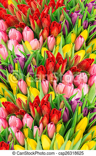 Bouquet Of Multicolor Tulips Fresh Spring Flowers With Water Drops