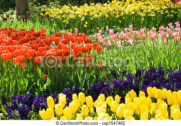 Tulips, hyacinths and daffodils - csp1547462