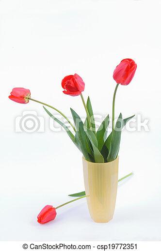 Tulips in a vase - csp19772351