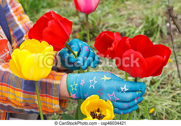 Tulips In The Garden Picture Of Human Hands Taking Care Of