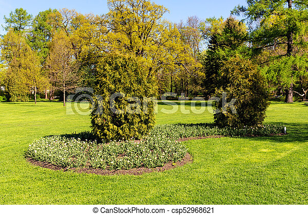 tulips in the park - csp52968621