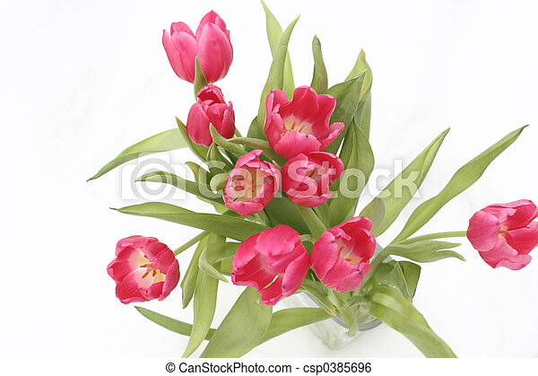 tulips on snow - csp0385696