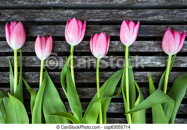 tulips on wooden background - csp63055714